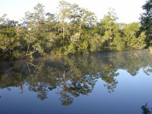 Sopchoppy River - Florida